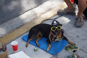 Key West Dog